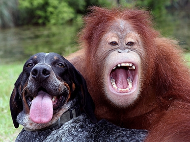 dog and orangutan